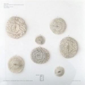 7 coralli bianchi